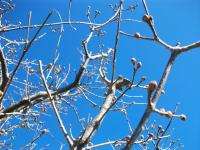 木々が芽吹いてきました。春はもうすこしです。